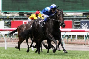 Seascay Handicap winner Tashbeeh will travel to the UAE for the Dubai World Cup carnival next month.