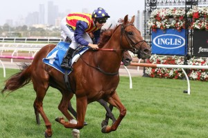 Nature Strip, above, is likely to head to Adelaide for the Lightning Stakes at Morphettville. Photo by Ultimate Racing Photos.