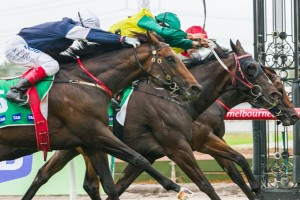 Foundry (outside) has been included in 2015 Kingston Town Stakes nominations. Photo: Race Horse Photos Australia