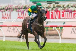 Trainer Gerald Ryan has confirmed Snitzerland as a definite starter in the 2014 T.J. Smith Stakes