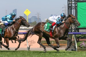 Amphitrite, above, cruises to a comfortable win in The Vanity at Flemington. Photo by Ultimate Racing Photos.