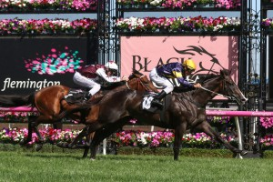 Grunt, above with gold cap, earns a start in the Austalian Guineas with his win in the CS Hayes Stakes at Flemington. Photo by Ultimate Racing Photos.
