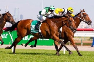 Trainer Colin Scott is happy with the condition of Speediness leading into the 2014 Doncaster Mile