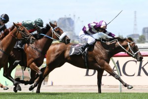 2016 Epona Stakes Tips and Betting Preview