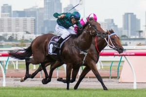 CS Hayes Stakes first two Wandjina (outside) and Disposition (inside) both feature in the Australian Guineas first acceptances.