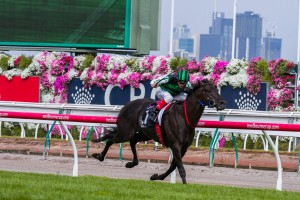 Shamus Award will be chasing another place in this history books in this weekend's Group 1 Rosehill Guineas