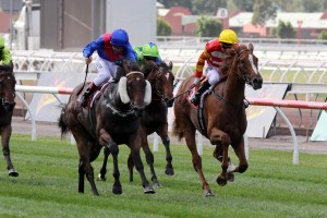 Ygritte (outside) will chase Group 1 success through the 2014 Spring Racing Carnival