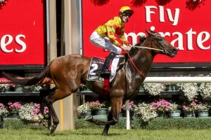 Lankan Rupee is match-fit for his showdown with Buffering in the Manikato Stakes tomorrow night.