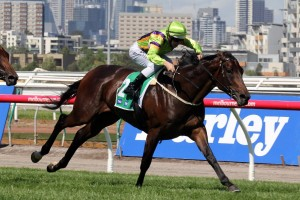 Solicit is chasing a maiden Group 1 win in Saturday's 2015 Myer Classic. Photo: Race Horse Photos Australia