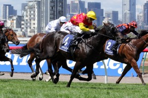 Zululand has been confirmed in the final field for the 2014 Champagne Stakes
