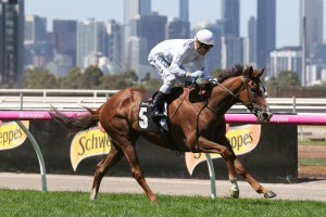 Kings Will Dream, above, wins again at Flemington. Photo by Ultimate Racing Photos.