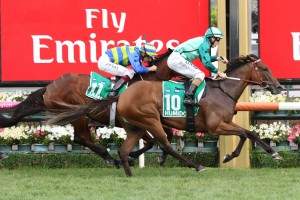 Humidor, above in green colours, is trainer Darren Weir's pick of his four runners in the 2018 Makybe Diva Stakes at Flemington. Photo by Ultimate Racing Photos.