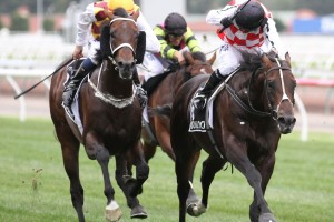 Preferment & Awesome Rock
