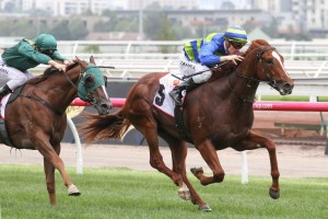 Seaburge, above in green and blue colours, will be lining up against Winx in the 2017 Ladbrokes Cox Plate at The Valley. Photo by Ultimate Racing Photos.