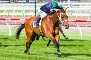 Trainer Chris Waller has revealed his ideal path for Our Voodoo Prince on the way to the 2014 Caulfield Cup