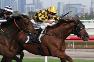 Manapine currently occupies the second line of 2015 SA Derby betting. Photo: Adrienne Bicknell
