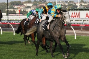 Silverball is favourite to win the 2015 Kingston Town Stakes. Photo: Adrienne Bicknell