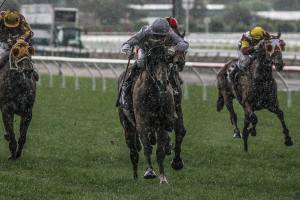 Authoritarian slogged his way through the wet to win the 2015 VRC St Leger at Flemington this afternoon. Photo by: Adrienne Bicknell