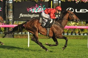 Runaway, above, has been withdrawn from the Lexus Stakes to be saved for the 2018 Melbourne Cup at Flemington. Photo by Ultimate Racing Photos.