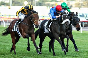 Shoreham (outside) looks likely to contest the 2015 Grafton Cup. Photo: Race Horse Photos Australia