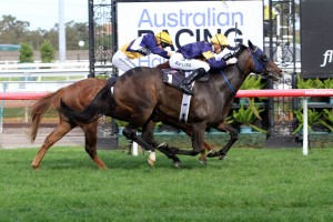 Loyalty Man is likely to accept into the 2016 Villiers Stakes field. Photo: Ultimate Racing Photos
