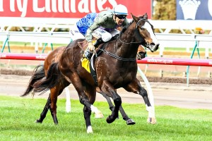 Forgive And Forget headlines the Yellow Glen Vintage Stakes nominations.