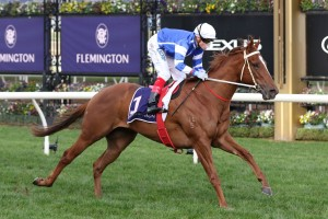 Gytrash, above, scored a sensational win in the 2020 Concorde Stakes at Randwick. Photo by Ultimate Racing Photos.