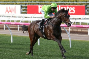 Royal Symphony has been included in 2017 Ladbrokes Caulfield Guineas nominations. Photo: Ultimate Racing Photos