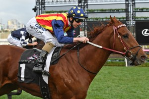 Nature Strip, above, is still chasing a slot for the 2018 version of The Everest at Randwick.