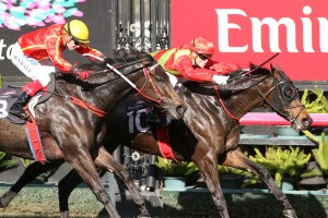 2018 Toowoomba Weetwood Handicap Field & Odds