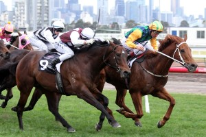 Mr Chard (outside) may warrant a 2014 Epsom Handicap berth with a strong performance in the Group 3 Cameron Handicap