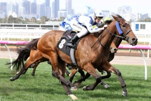 Sheer Madness will be set for the Group 1 Victoria Derby (2500m) this time in. Photo: Ultimate Racing Photos