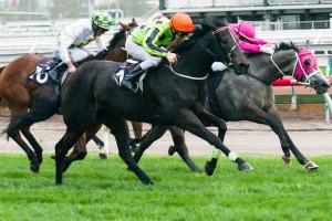 Commanding Jewel will not return to the races until the 2014 Brisbane Winter Racing Carnival.
