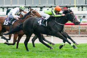Commanding Jewel will contest the 2014 Toorak Handicap