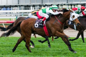 Speediness is on track to return to the races in the Group 2 Expressway Stakes at Royal Randwick on February 8.
