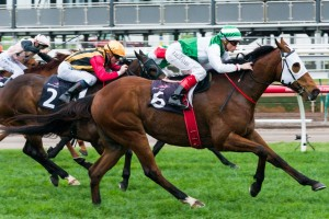 Speediness is yet to be confirmed for a start in the 2014 Sandown Stakes. Photo: Race Horse Photos Australia