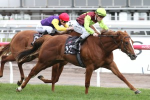 Bon Aurum offers great value for money in Caulfield Guineas Prelude betting markets. Photo: Ultimate Racing Photos