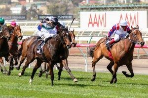 Lumosty (inside) currently leads Moonee Valley Fillies Classic betting markets. Photo: Race Horse Photos Australia