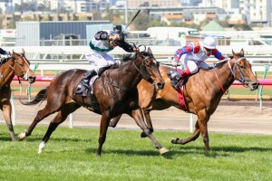 Lumosty (inside) will contest the Thousand Guineas at Caulfield following a brilliant maiden win at Sale.