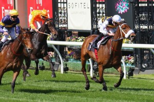 Brambles is a leading chance for success in the 2014 Caulfield Cup. Photo: Race Horse Photos Australia