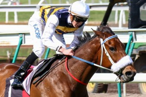 Brambles is the market mover of the Caulfield Cup, seeing his price shorten from $21 to $9.