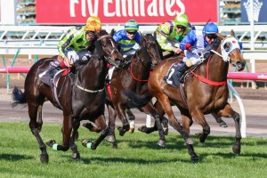 Commanding Jewel (outside) and Dear Demi (inside) will face off once again in the Stocks Stakes at Moonee Valley.