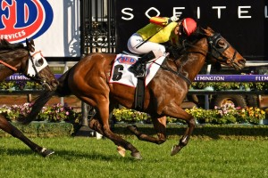 Gatting, above, will carry the number 1 saddlecloth in the 2019 Railway Stakes at Ascot in Perth. Photo by Ultimate Racing Photos.