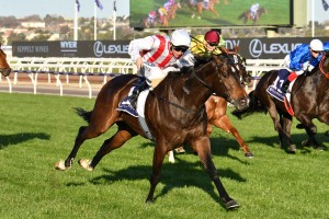 Zoutori, above, was a nose winner in the Gilgai Stakes at Flemington. Photo by Ultimate Racing Photos.