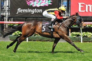 Temple Of Boom is in great order ahead of his return in Saturday's George Moore Stakes at Doomben. Photo: Taron Clarke