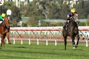 Chautauqua crusied home to victory in the 2014 Gilgai Stakes, four lengths ahead of Bounding.