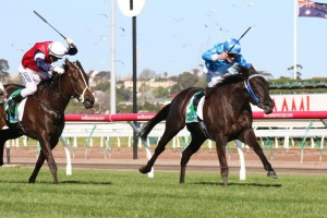 Fontein Ruby won the 2014 Edward Manifold Stakes for Robert Smerdon.