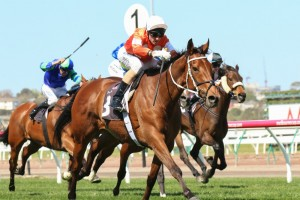 Who Shot Thebarman will contest this weekend's featured Group 1 Caulfield Cup. Photo: Race Horse Photos Australia