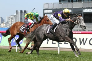 Chautauqua will make his competitive return in the 2017 Rubiton Stakes. Photo: Ultimate Racing Photos