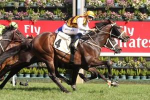 Preferment was far too good in the 2015 Turnbull Stakes. Photo: Ultimate Racing Photos